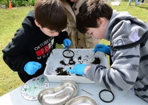 40 things to do – 36:  Go Pond Dipping