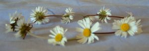 40 things to do – 15: Make a daisy chain