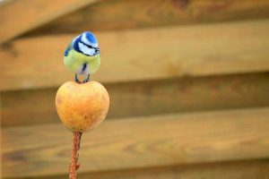 40 things to do – 28: Make a bird feeder