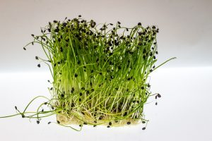 40 things to do – 17: Grow Some Cress