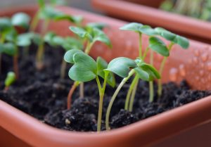 Growseed.co.uk – Seeds for schools offer